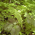 Lush foliage on the floor of the forest