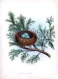 Bird nest pine vintage image graphicsfairy11sm